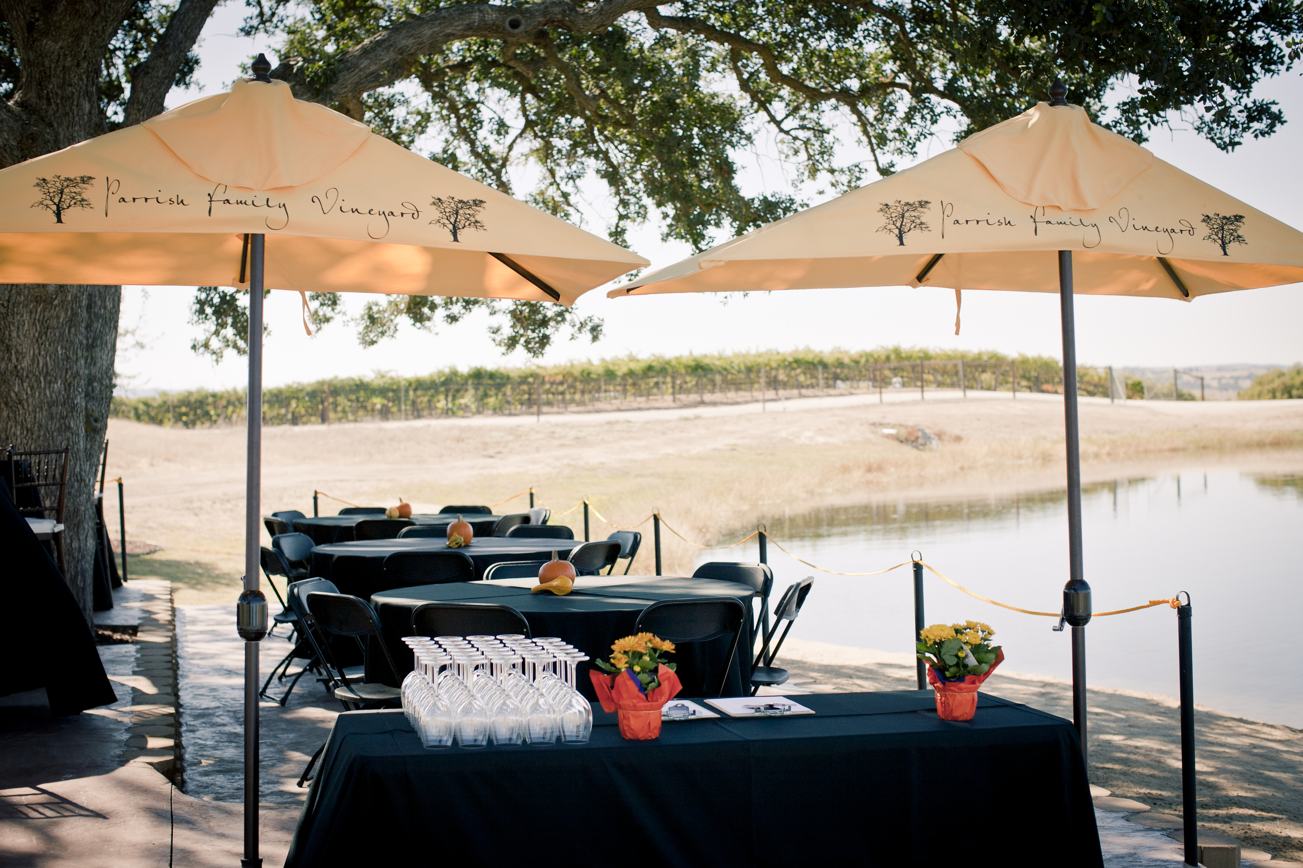 2012 Harvest Party Highlight The Vineyard And Lake