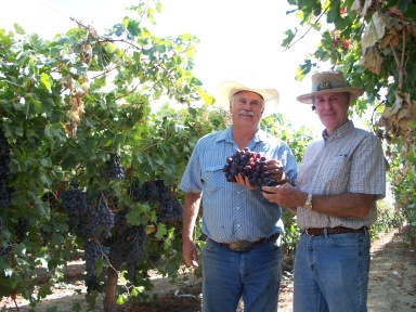 David with Tim Raven a table grape grower