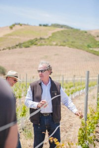David in the vineyard